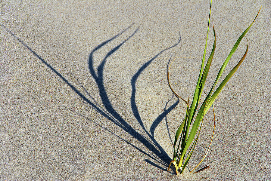 Shadow Photograph - Shadow Grass by Cate Franklyn