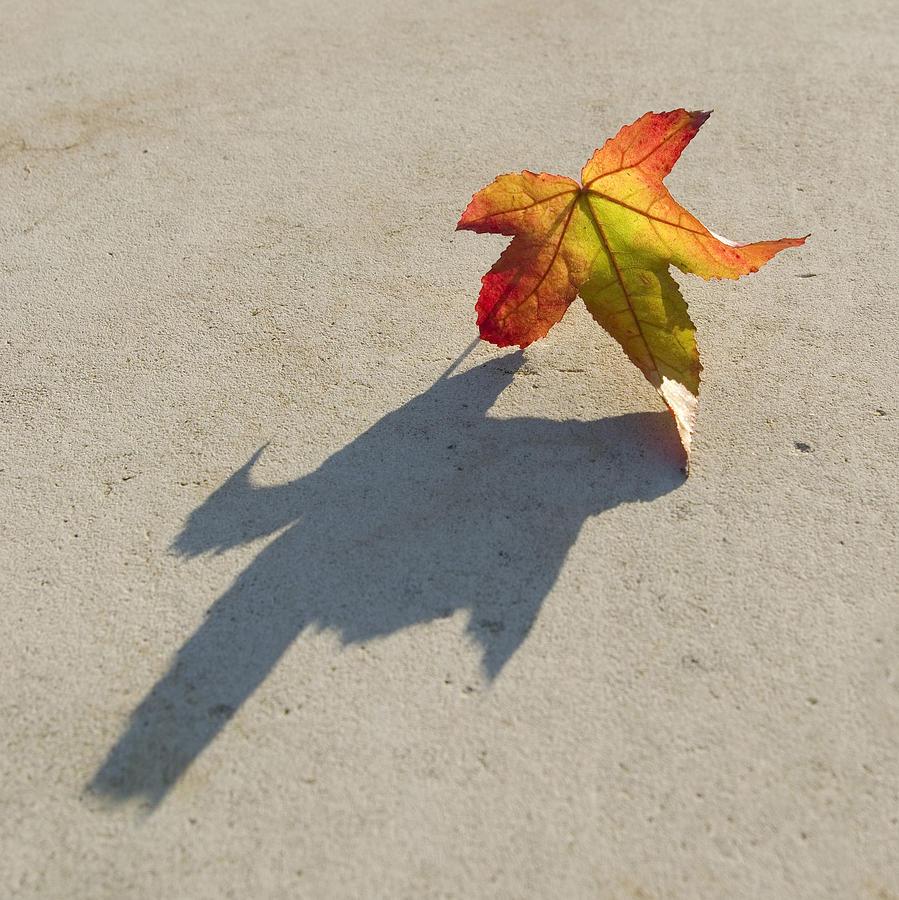 Autumn Leaf Photograph - Shadow Of A Leaf by Pixie Copley