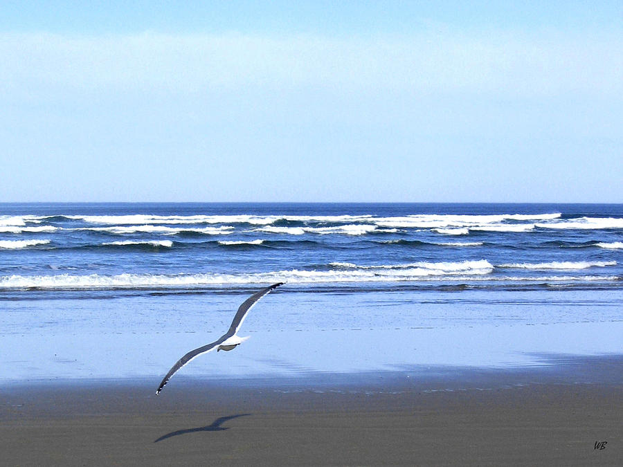 Seagull Photograph - Shadow On The Sand by Will Borden
