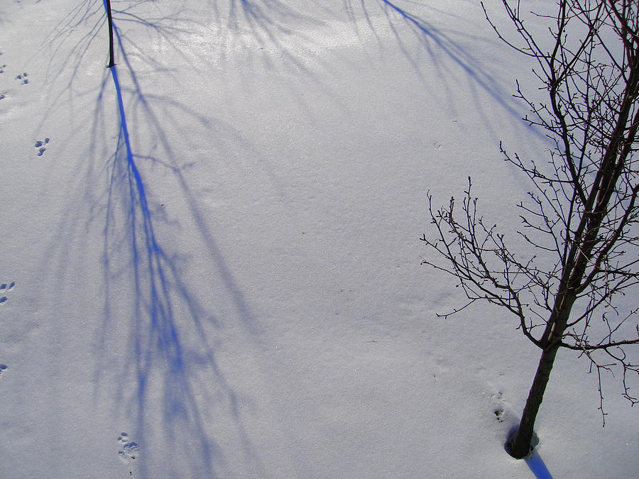 Snowscape Photograph - Shadows And Silhouettes by Terry  Wiley