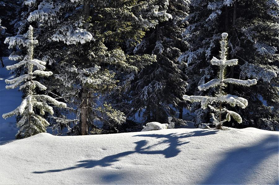 Shadows in the Snow by Mike Helland