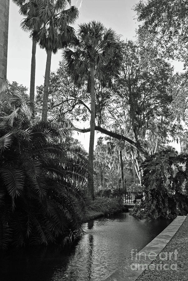 Black Photograph - Shadows Of Florida by Jost Houk