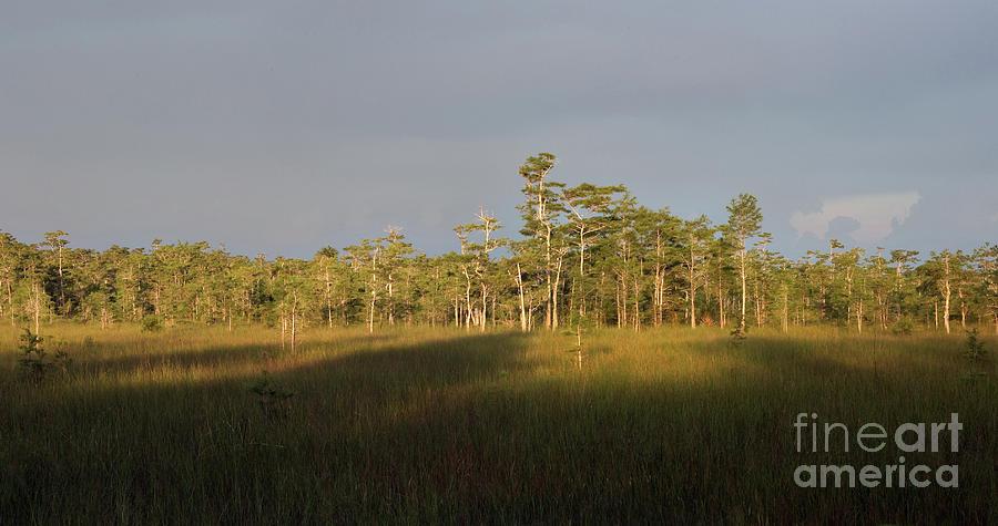 Florida Everglades Photograph - Shadows Of The Cypress by Matt Tilghman