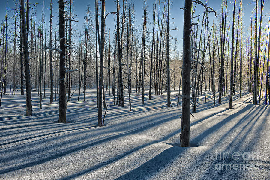 Yellowstone Photograph - Shadows Of The Forest by Sandra Bronstein