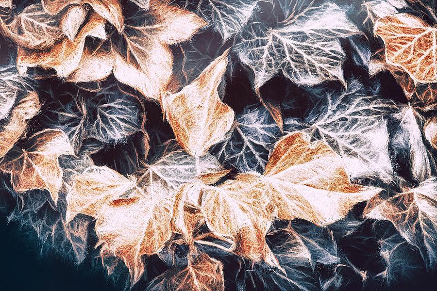 Ivy Photograph - Shadows Of The Ivy by Jaroslav Buna