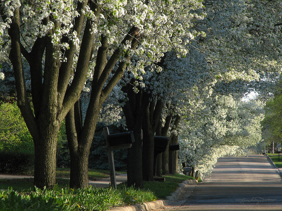 Tree Lined Street Photograph - Shady Grove by Karen Casey-Smith
