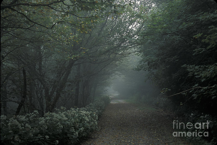 Tennessee Photograph - Shady Lane by Stan and Anne Foster