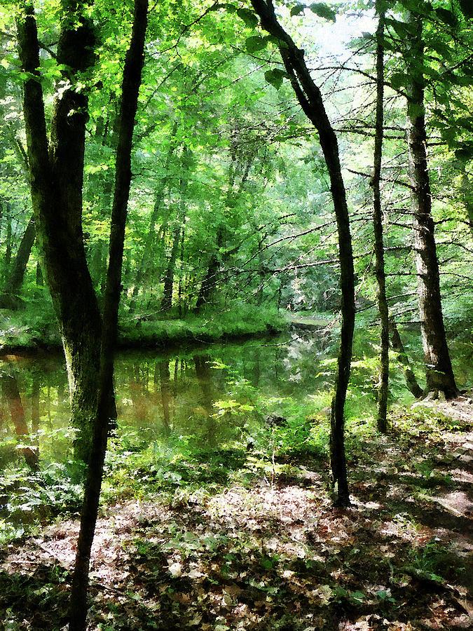 Summer Photograph - Shady Woods by Susan Savad