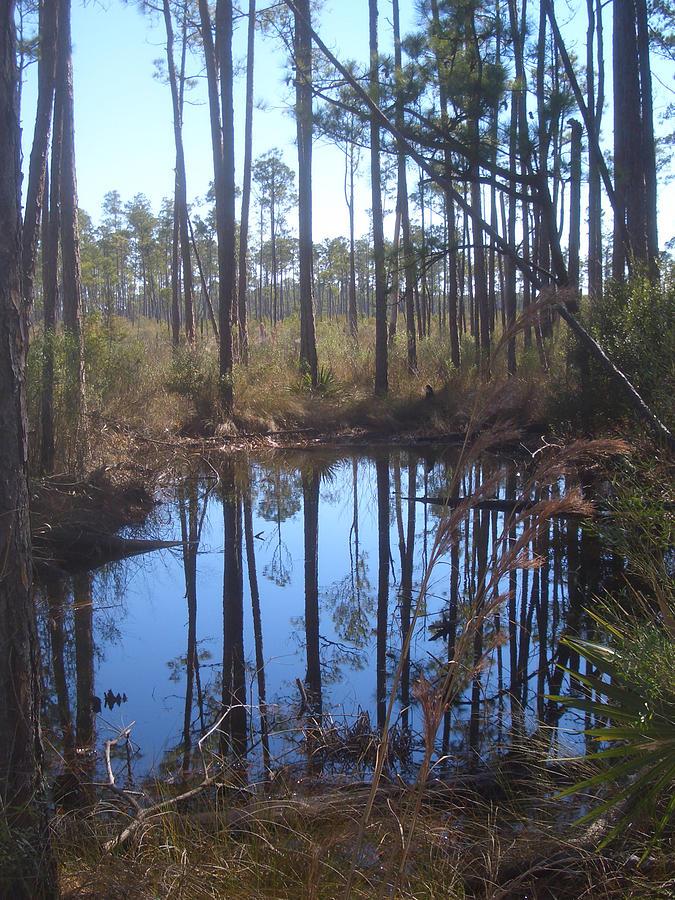 Louisiana Photograph - Shallow Pond by Steve Ellis