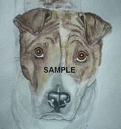 Shar Pei And Pit Mix Painting by Billie Riholm