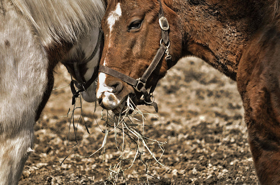 Horse Photograph - Sharing The Hay by JAMART Photography
