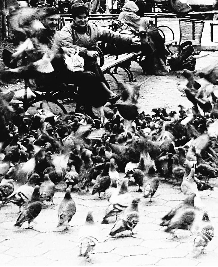 Birds Photograph - Sharing With The Pigeons  by Elizabeth La Caille