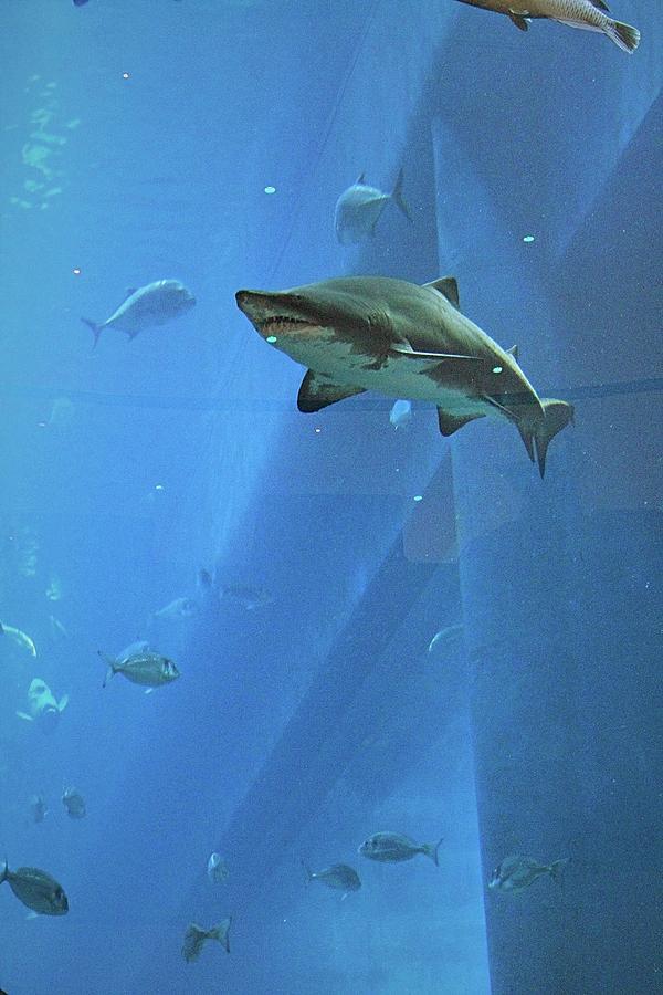 Aquarium Photograph - Sharknado In Dubai by Mario MJ Perron