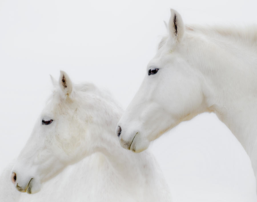 White Horses Photograph - She Dreamed Of White Horses by Ron  McGinnis