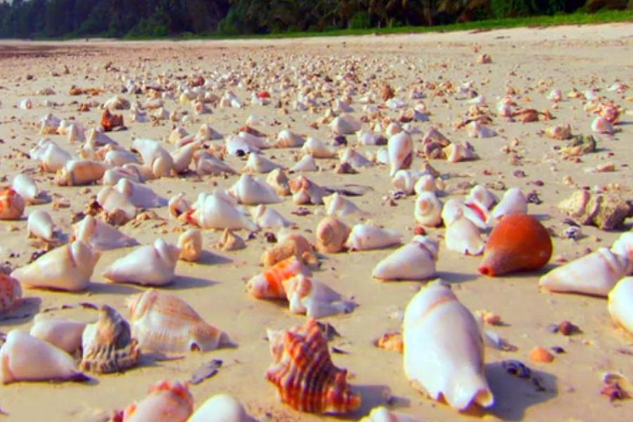 She Sells Sea Shells At The Sea Shore Seaweed And Sea ...