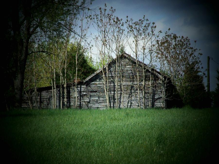 Shed Photograph - Shed And Trees by Michael L Kimble