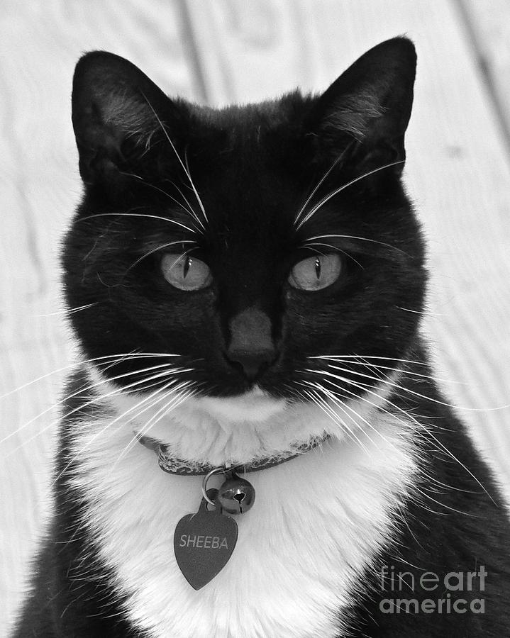 Cat Photograph - Sheeba In Black And White by Jean Wright