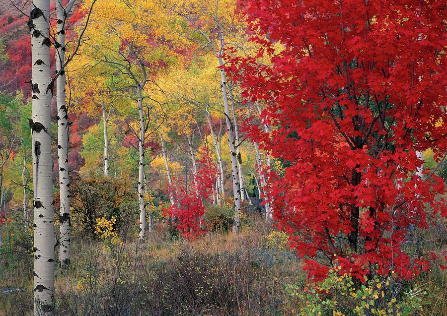 Autumn Photograph - Sheep Canyon In Autumn by Leland D Howard