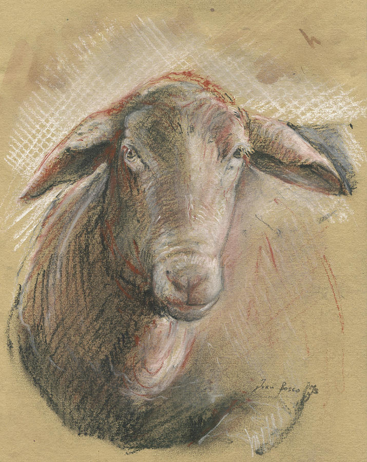 Sheep Watercolor Painting - Sheep Head by Juan Bosco