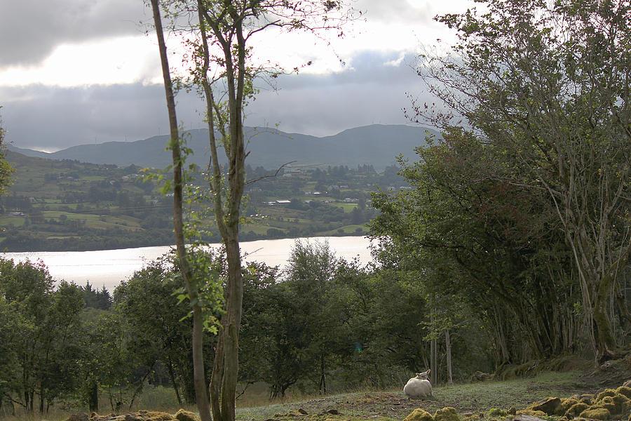 Sheep near Lough Eske by John Moyer