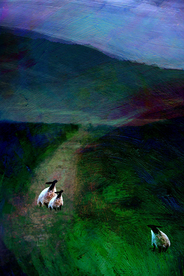 Black Faced Sheep Digital Art - Sheep On The Moor by Jean Moore