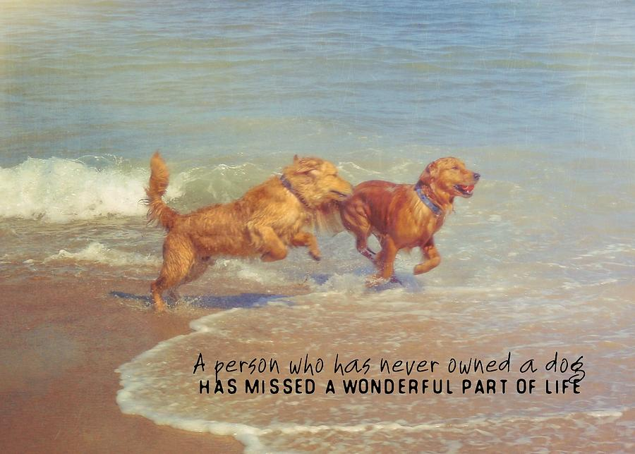 Dog Photograph - Sheer Joy Quote by JAMART Photography