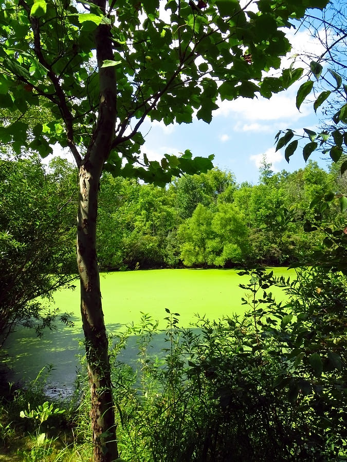 Sheldon Marsh Photograph - Sheldon Marsh Algae Pond by Shawna Rowe