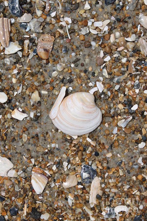 Beach Photograph - Shell 1 by Marcie Daniels
