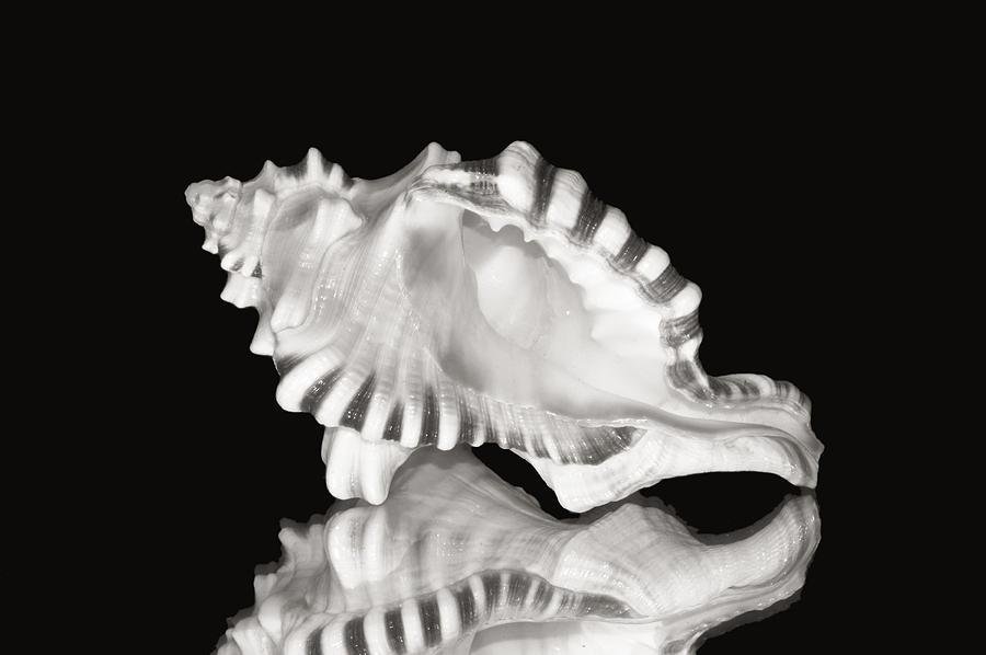 Aquatic Photograph - Shell And Reflection by Bill Brennan - Printscapes
