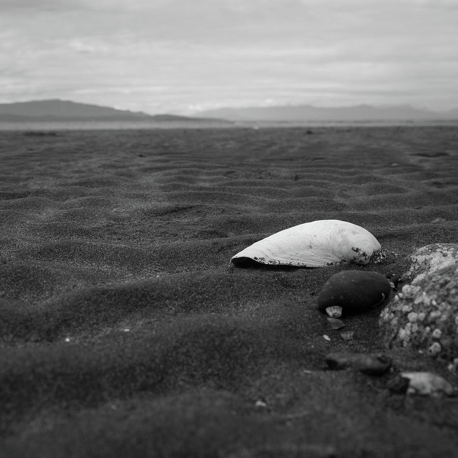 Seashell Photograph - Shell and Sand by Trance Blackman