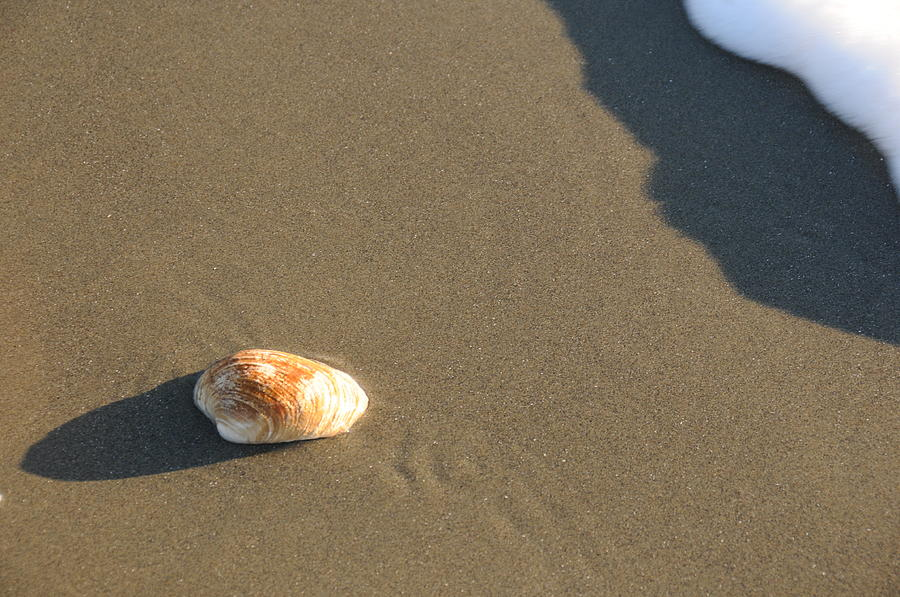 Beach Shell Sand Sea Ocean Photograph - Shell And Waves Part 2 by Alasdair Turner