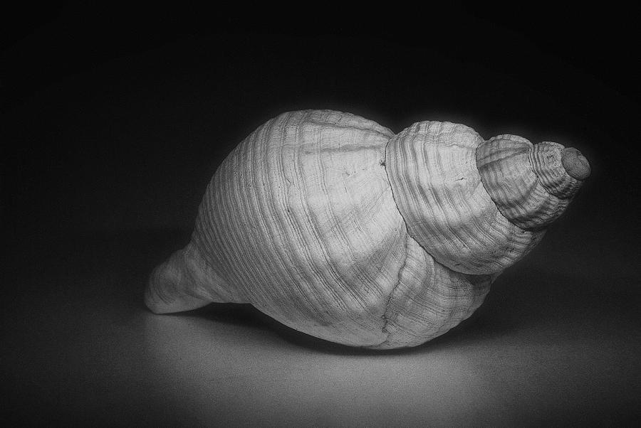 B W Photograph - Shell by Fraser Davidson
