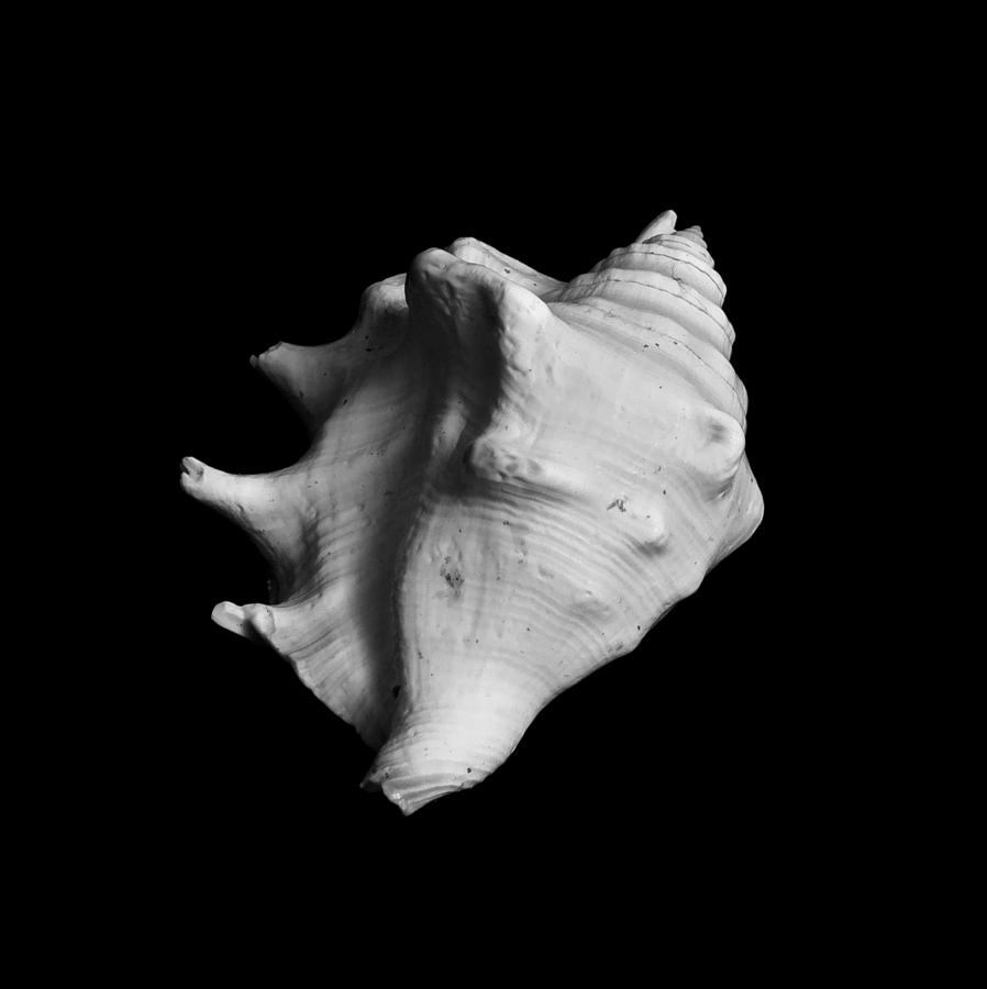 Seashell Photograph - Shell No. 2 by Henry Krauzyk