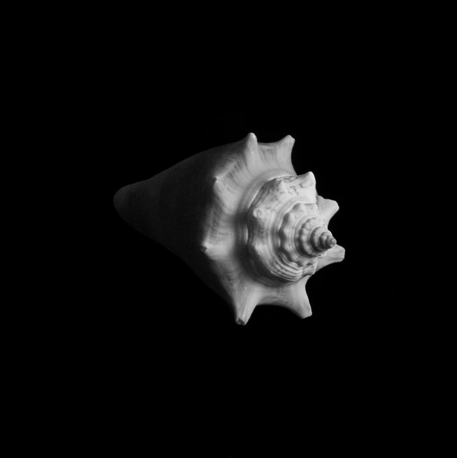 Seashell Photograph - Shell No. 4 by Henry Krauzyk