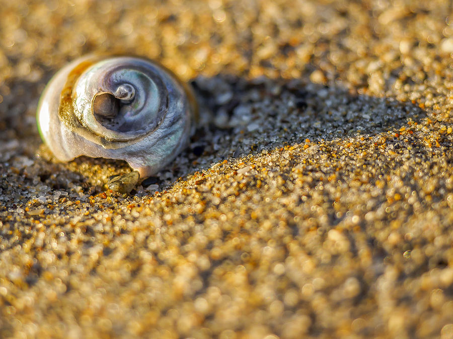 Shell Photograph - Shell by Steve Spiliotopoulos