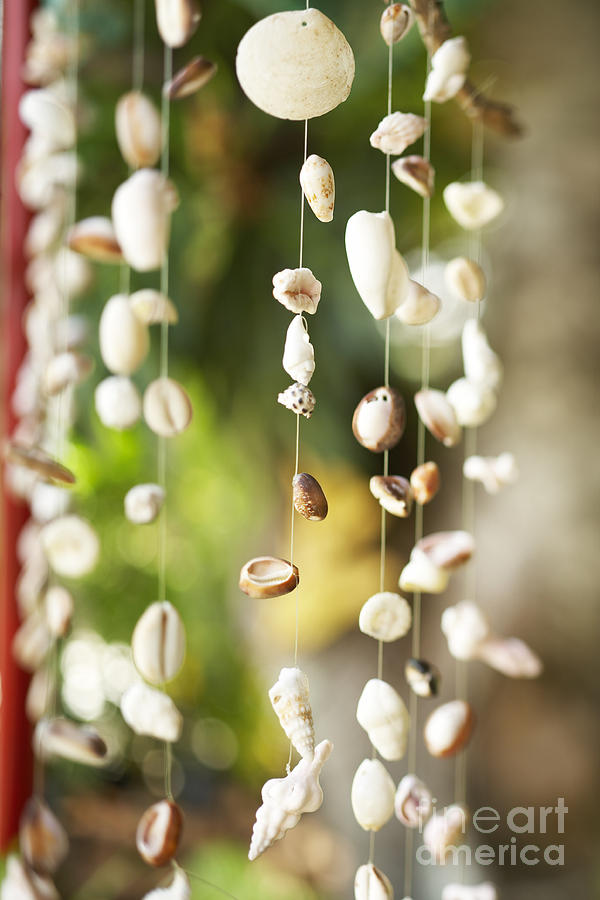 Brown Photograph - Shell Windchimes by Kyle Rothenborg - Printscapes