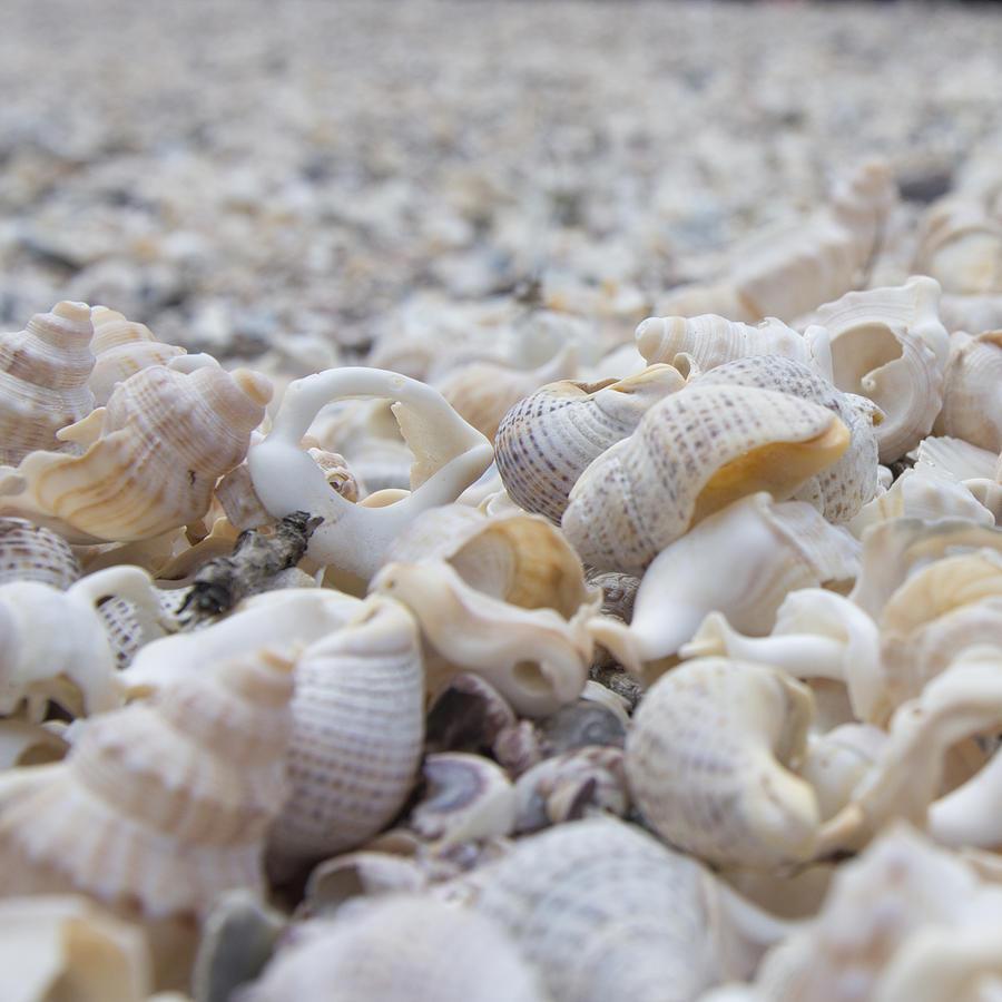 Shells 3 by Jocelyn Friis