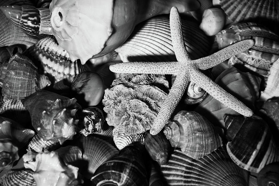 Shells and Starfish in Black and White by Angie Tirado