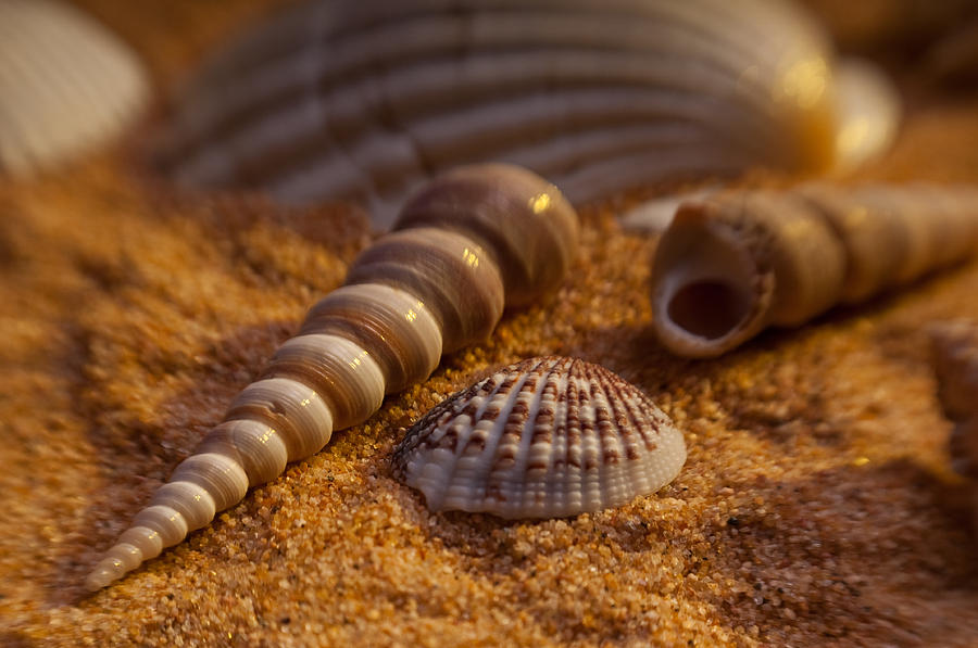 Shells Photograph - Shells by Anthony Towers