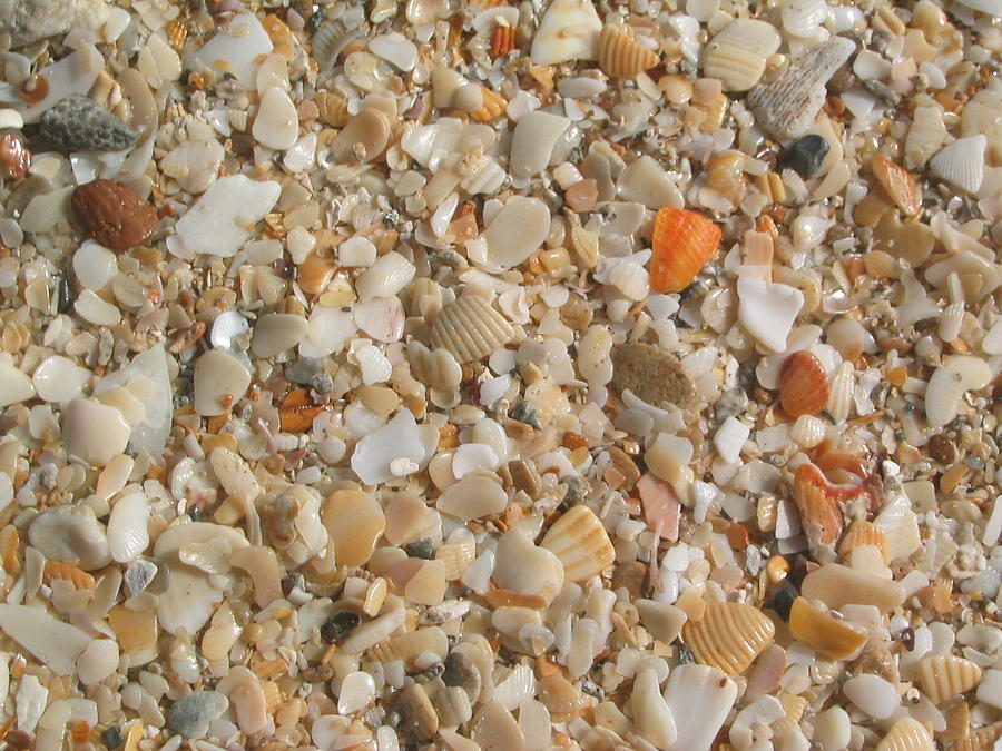 Sand Photograph - Shells  by Eliot LeBow