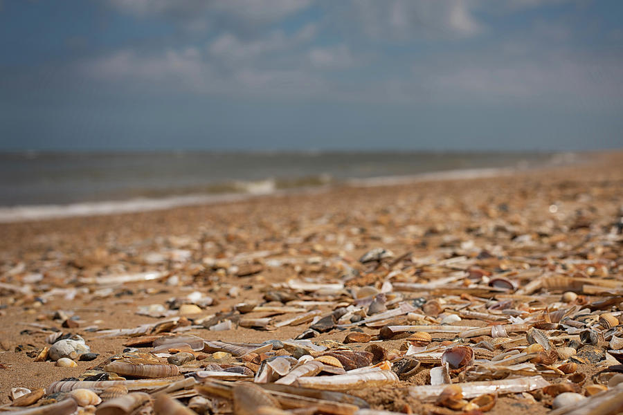 Shells Forever by Nick Bywater