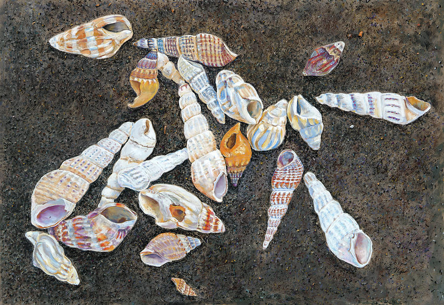 Shells from the Sea of Galilee by Nick Payne