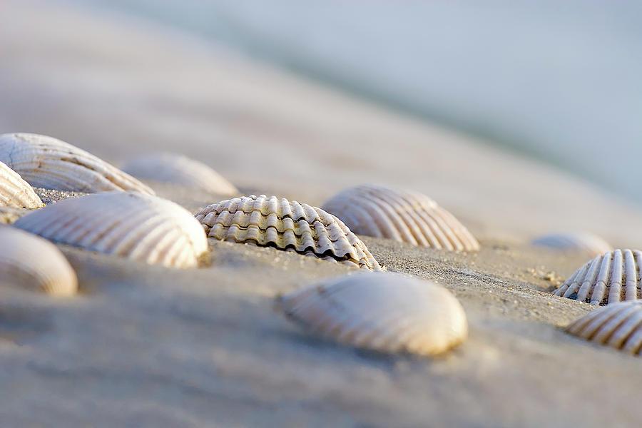 Shells Photograph