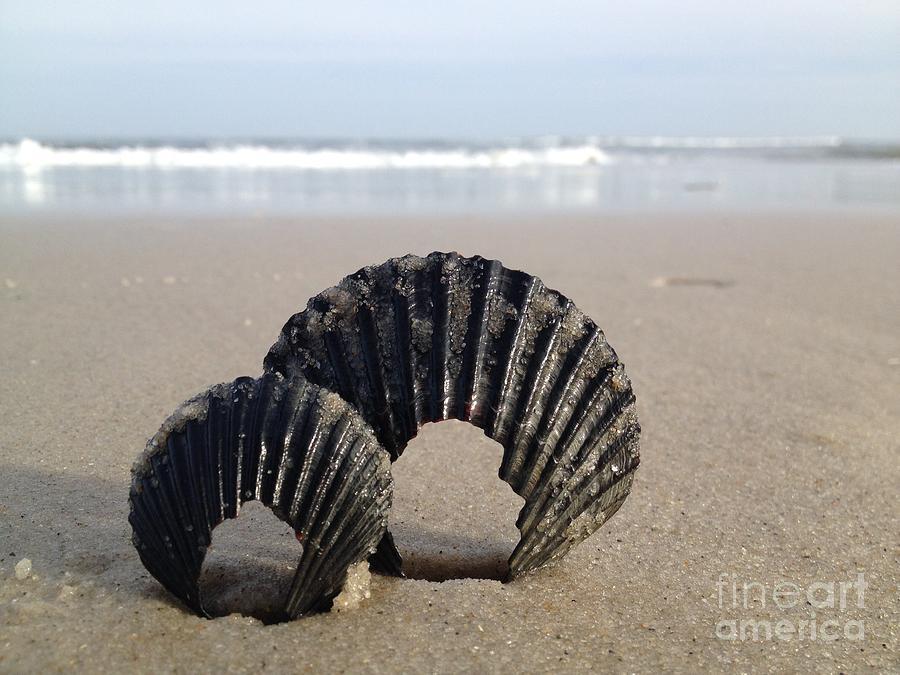 Shells Photograph - Shells by Stephanie  Varner