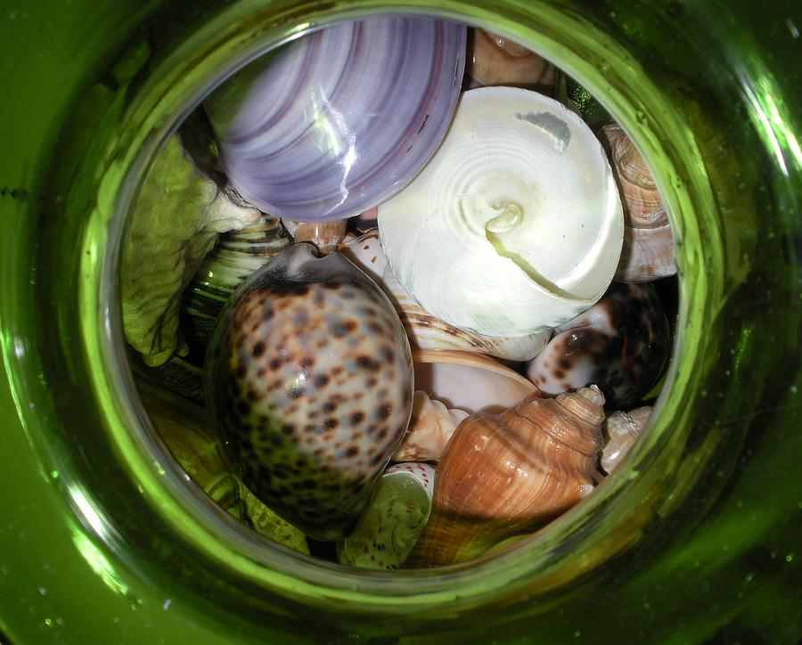 Sealife Photograph - Shells Under Glass II by Maria Bonnier-Perez