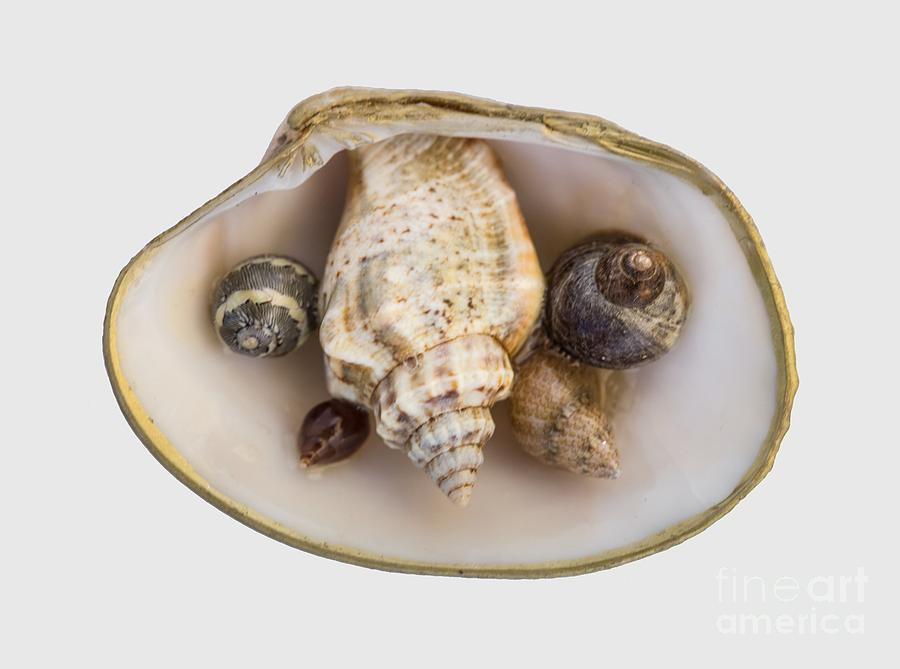 Shells Within a Sea Shell by Em Witherspoon