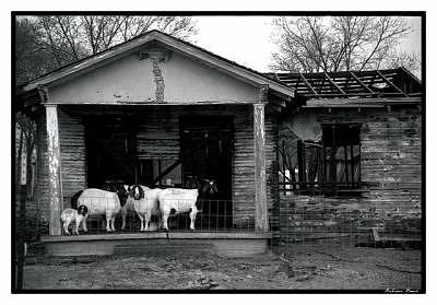 Film Photograph - Shelter by Melissa Bond