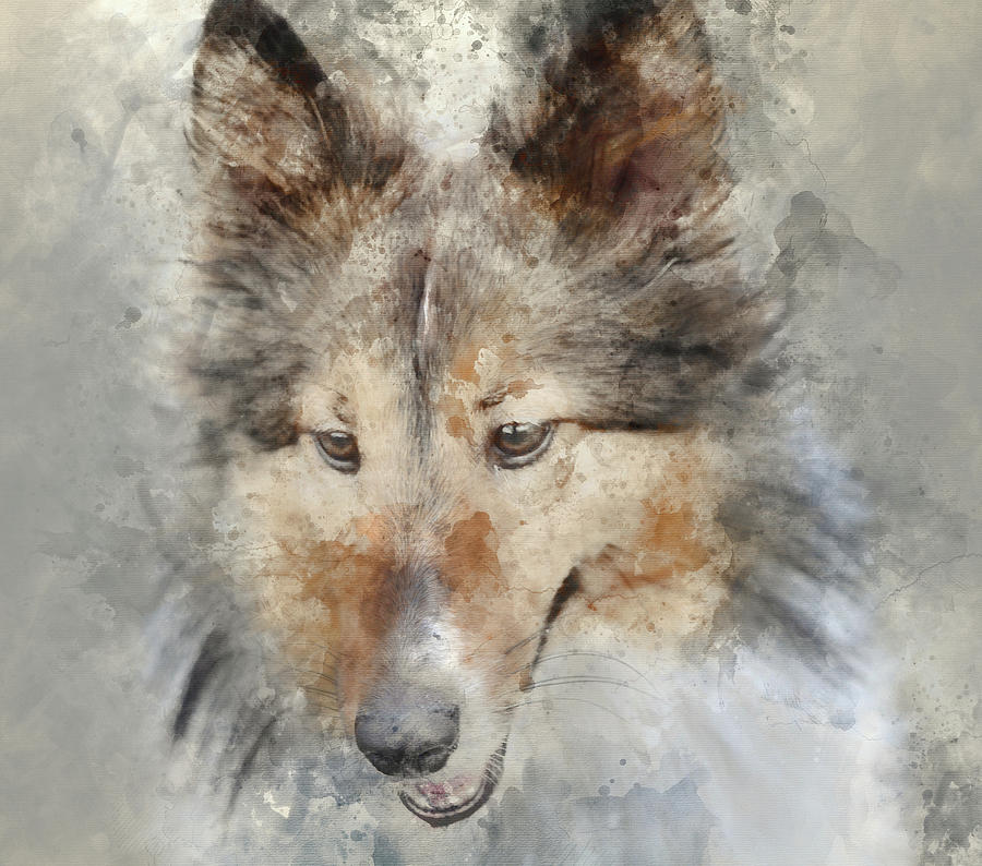 Dog Photograph - Sheltie - Digital Art Watercolor by Brandon Bourdages