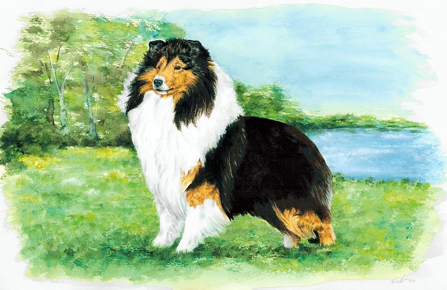 Shetland Sheepdog Painting - Sheltie Wait by Kathleen Sepulveda