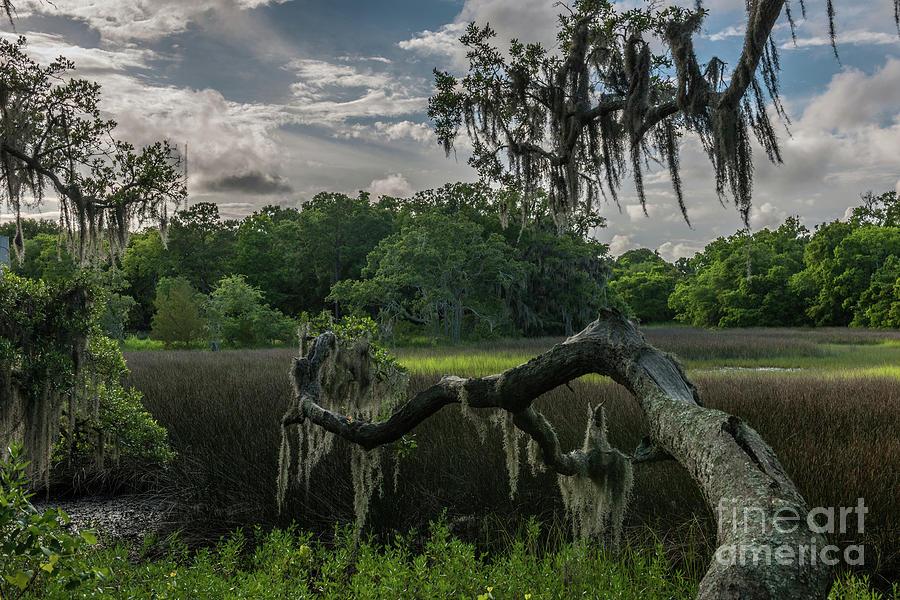 Shem Creek Marsh Paradise Photograph